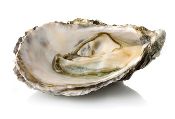 Fresh opened oyster isolated on white background