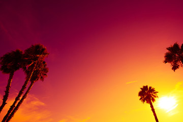 California palm trees silhouettes at vivid colorful summer sunset light with copy space