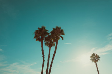 California beach palm trees at summer hot day vintage color stylized with copy space