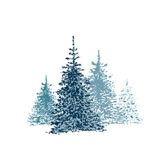 hand drawn spruce forest