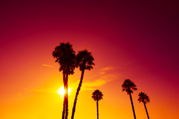 California palm trees silhouettes at vivid colorful summer sunset light