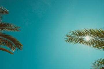 Vintage color toned palm trees leaves and clean sky with shining sun background