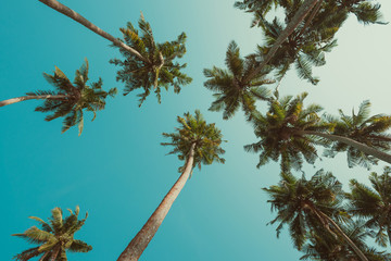 Vintage toned curly palm trees and blue sky perspective view from ground