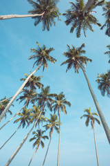 Long tropical coconut palm trees over blue sky perspective view from ground
