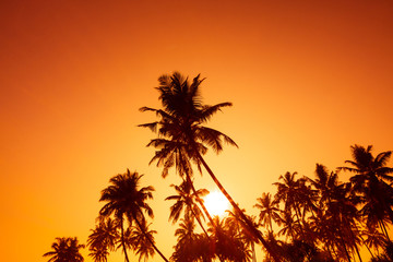 Silhouettes of tropical palm trees at warm sunset