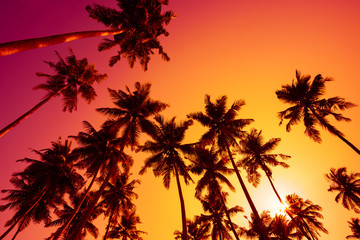 Silhouettes of tropical palm trees at sunset