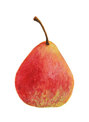 Ripe red pear fruit painted with watercolor on white background