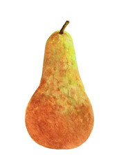 Ripe brown pear fruit painted with watercolor on white background