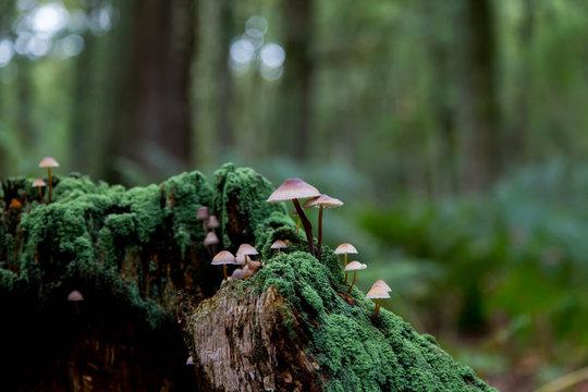 Pilze auf abgestorbenem Baumstumpf
