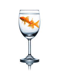 goldfish in glass of water isolated on a white background