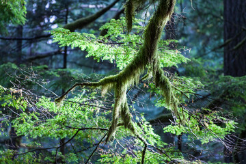 Moss on branch in forest
