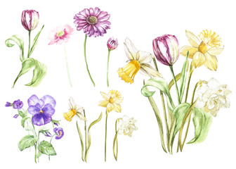 Big Set Watercolor collection with plants elements - leaf, flowers. Botanical illustration isolated on white background. Floral nature. Flowers narcissus and tulip, Gerbera, Pansy.