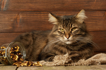 Tabby cat on rustic background