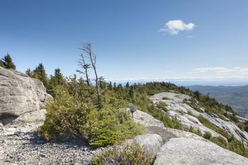 Sunny Windswept Bald Peak, Adirondack Mountains, New York State