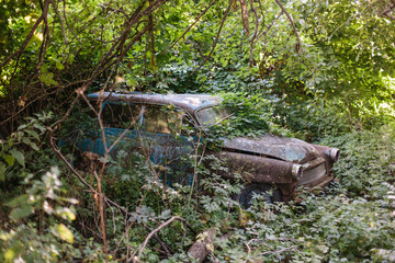 Old car overgrown trees and shrubs