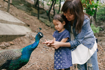 Mother and daughter feeding peacocks with hand
