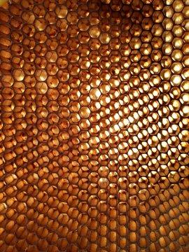 honey comb close up