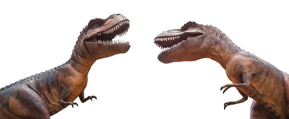 Tyrannosaurus rex are fighting . Isolated background
