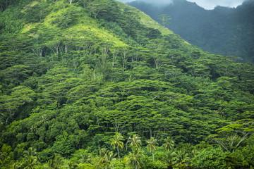 forêt tropicale en polynésie
