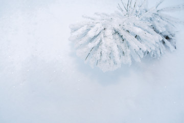 Winter background. Top right snow-covered branch of pine on white snow background with copy space.