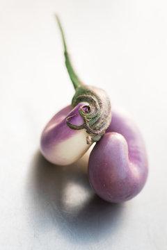purple japanese eggplant, curled up