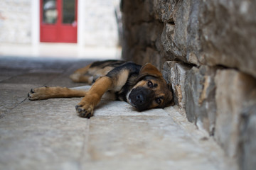 Dog takeing rest on the street