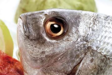 Gilt-head Sea Bream eye