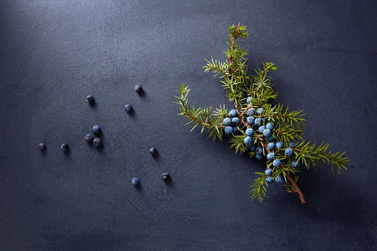 Juniper branch with berries