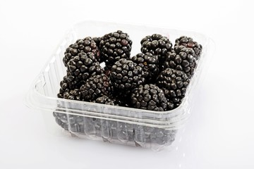 Blackberries in a plastic storage container