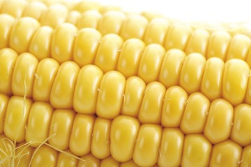 Cob of corn, close-up shot