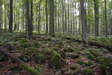 Schafstein mountain, Rhoen, Hesse, Germany, Europe