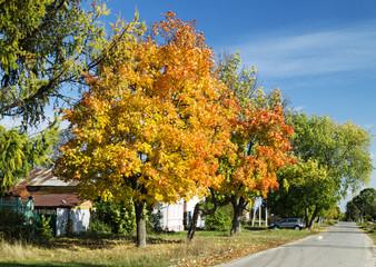 Autumn maple on background sky
