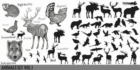 Huge super collection or set  of vector hand drawn detailed  forest animals