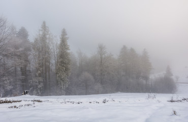 foggy weather in winter forest scenery. beautiful nature background with trees in hoarfrost in snowy meadow and overcast sky