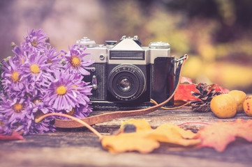old camera on the background of the gifts of autumn: bouquet of lilac autumn asters, maple leaves, pinecone and quince