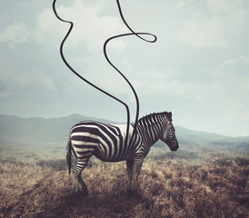 Photo sur Plexiglas Zebra Zebra and stripes