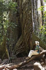 Strangler fig (Ficus subgenus Urostigma), Rincon de la Vieja National Park, Guanacaste, Costa Rica, Central America