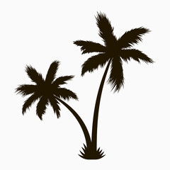 Palm tree silhouette. Realistic tropical plant. Vector illustration.
