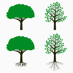 Tree with root and leaf. Set of trees. Vector illustration.