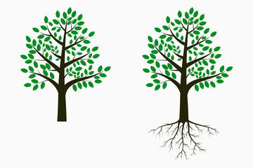 Tree with leaf and root. Set of trees. Vector illustration.