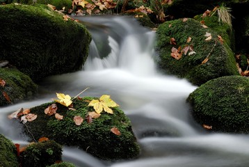 In de dag Bos rivier Kleine Ohe mountain stream and autumn leaves, Bayerischer Wald (Bavarian Forest), Bavaria, Germany, Europe
