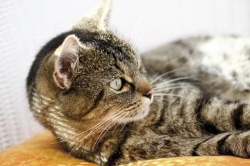 Alert cat