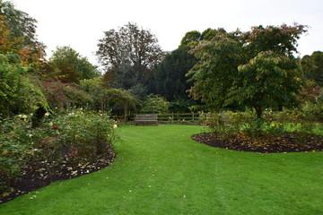 Autumn Roses Garden