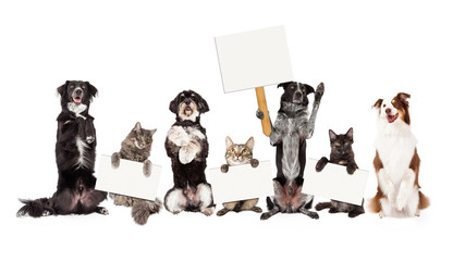 Group of Dogs and Cats Sitting Up Holding Blank Signs