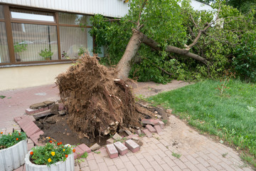 tree fell on the building. storm in city.
