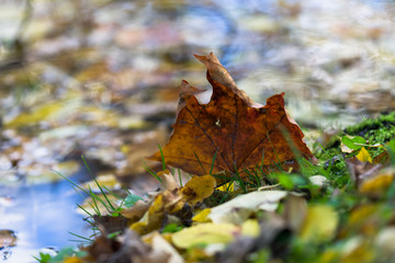 Autumn leaves in the puddle during fall