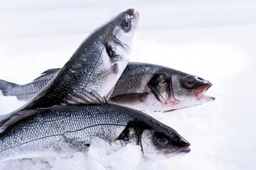 Sea Bass, Loup de Mer (Moronidae), raw