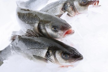 Three sea basses, raw on crushed ice