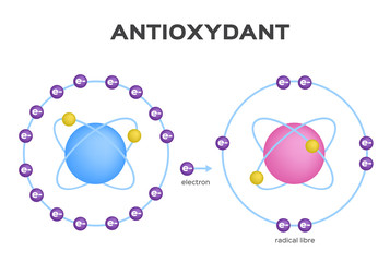 free radical and Antioxidant vector . Antioxidant donates electron to Free radical . infographic Wall mural