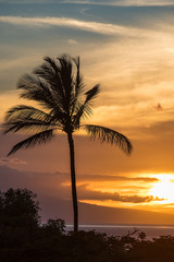 Palm Trees at an island sunset
